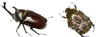 레진 속 곤충